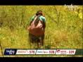 उत्तराखंड: भांग की खेती को मंजूरी का विरोध