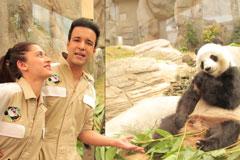 Aamir-Sajeeda Feed Giant Adorable Pandas | Discover Hong Kong | Zing TV