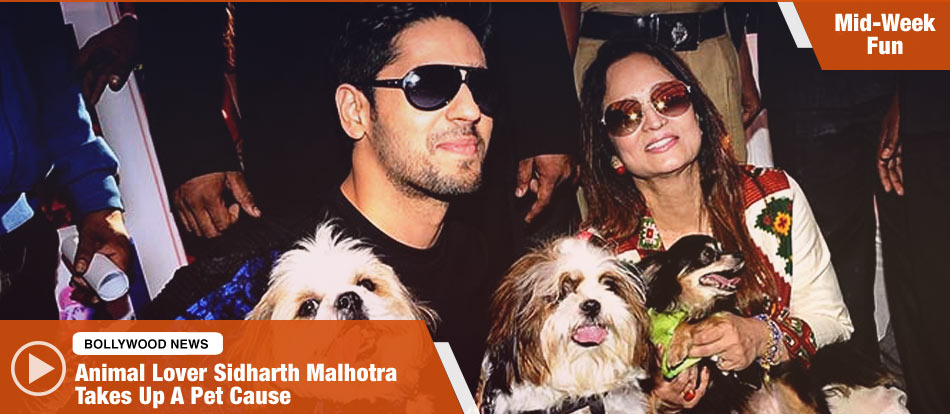 Animal Lover Sidharth Malhotra Takes Up A Pet Cause