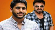 Venky-Chaitu Multistarrer Launch Soon